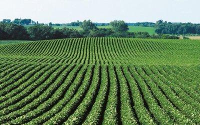 Syngenta responde a anuncio de Monsanto