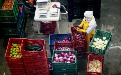 Sector agroalimentario es productivo y competitivo: Sagarpa