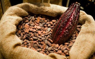 Agroempresarios forman parte del foro mundial de gastronomía
